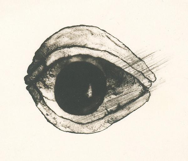 Dušan Grečner – Oko