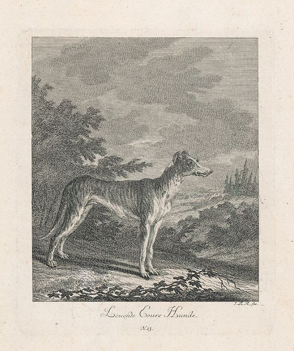Johann Elias Ridinger - Lovecký pes