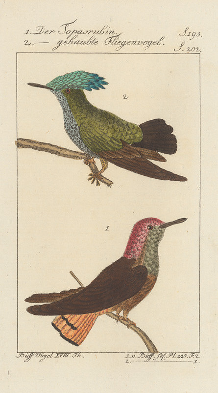 Johann Georg Schmidt - 6.ilustrácia