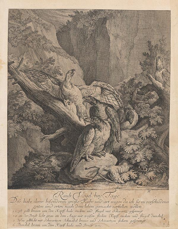 Johann Elias Ridinger – Draví skalní vtáci