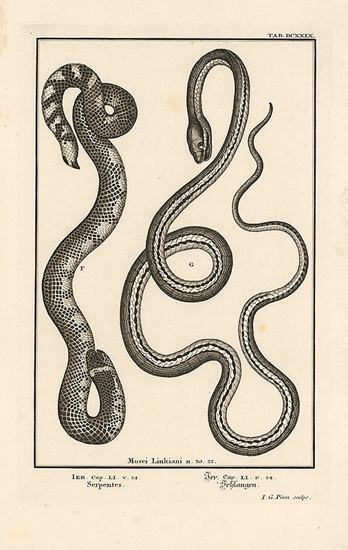 Johann Melchior Füssli, Johann Georg Pintz – Dva hady