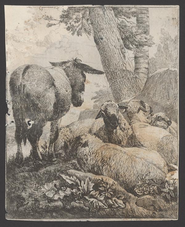 Johann Heinrich Roos - Ovce a somárik