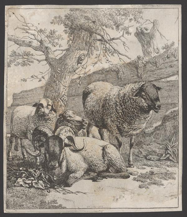 Johann Heinrich Roos – Ovce s baranom
