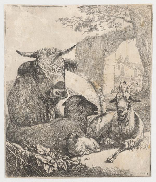 Johann Heinrich Roos - Ovce