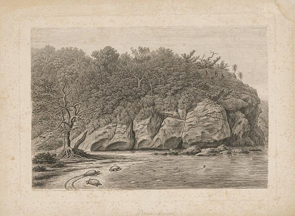 Neurčený autor z 18. storočia – Korytňačka