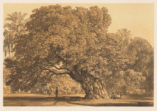 Karol Ľudovít Libay – Máriin strom pri Káhire