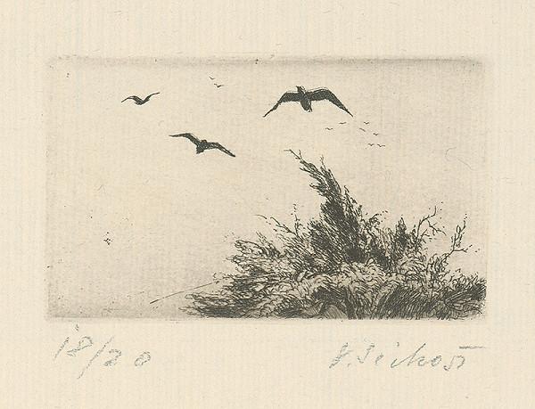 Václav Sivko - Vtáci odlietajú