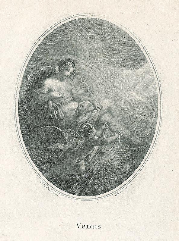 Franz Stöber, Johann Nepomuk Ender - Venuša