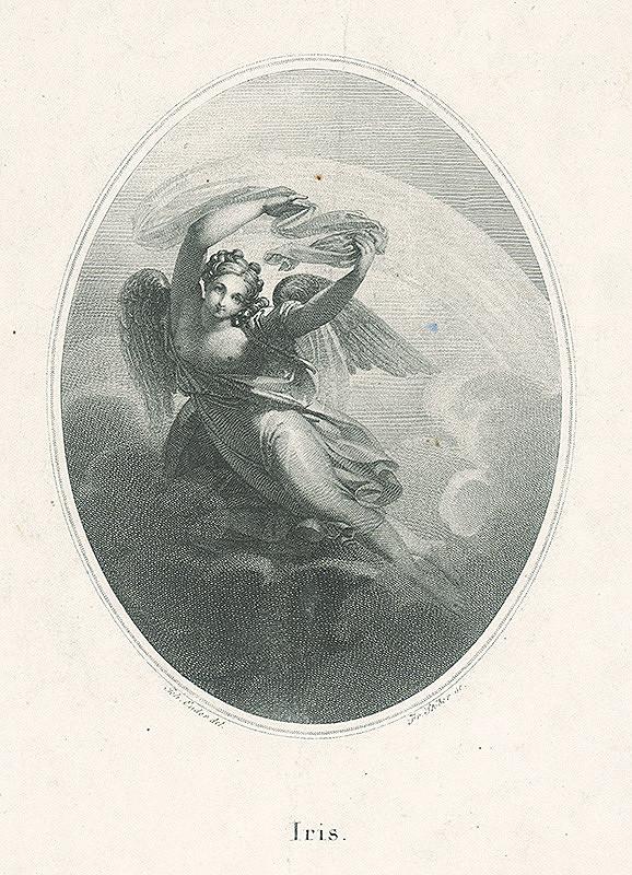 Franz Stöber, Johann Nepomuk Ender - Iris