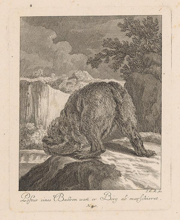 Johann Elias Ridinger - Postoj medveďa pri zliezaní kopca