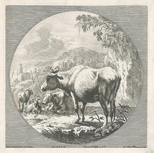 Johann Elias Ridinger, Johann Heinrich Roos, J. Wolffy – Krava
