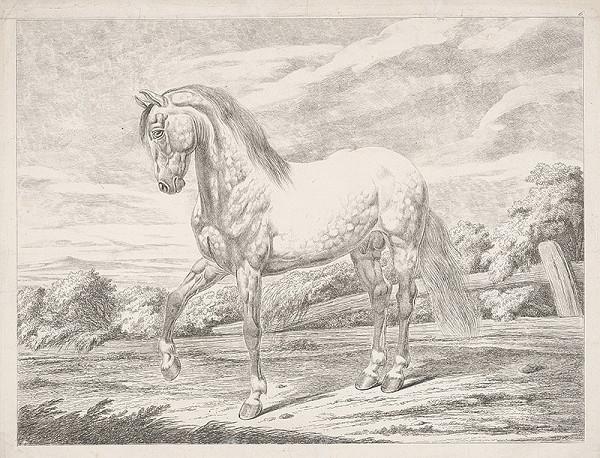 Stredoeurópsky autor z 19. storočia – Kôň v ohrade