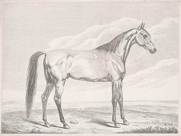 Stredoeurópsky autor z 19. storočia – Kôň na pláni