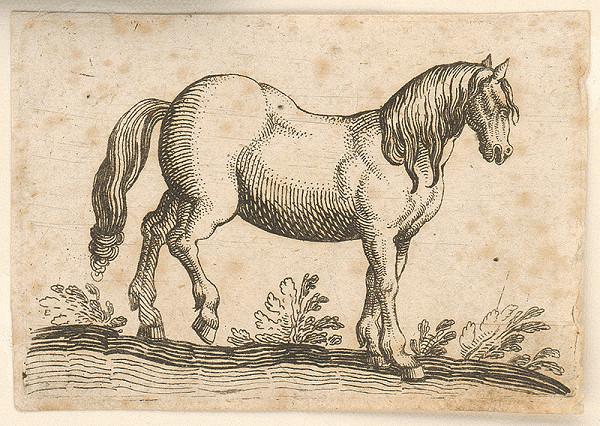 Stredoeurópsky autor z 18. storočia – Kôň