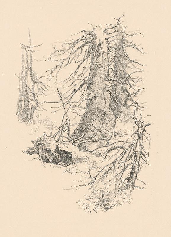 Jaroslav Vodrážka - Štúdie stromov B.
