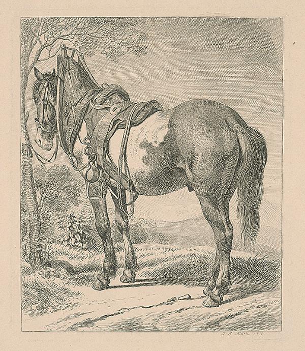 Johann Adam Klein – Kôň
