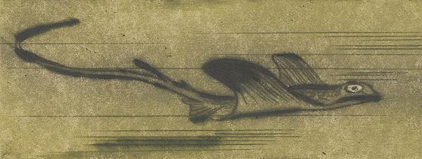 Mária Želibská – Morský drak