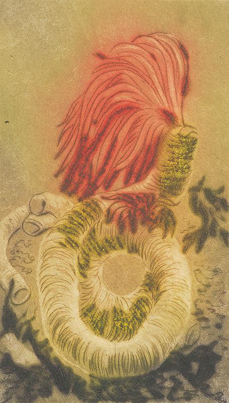 Mária Želibská – Kvetina