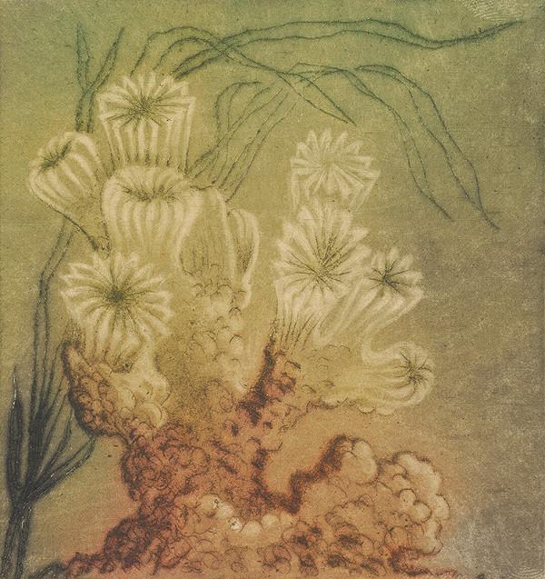 Mária Želibská – Morské tulipány