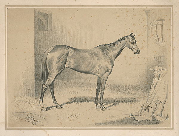 August Schneider – Kôň