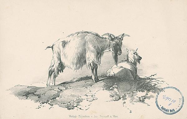 Stredoeurópsky autor z 2. polovice 19. storočia – Kozy