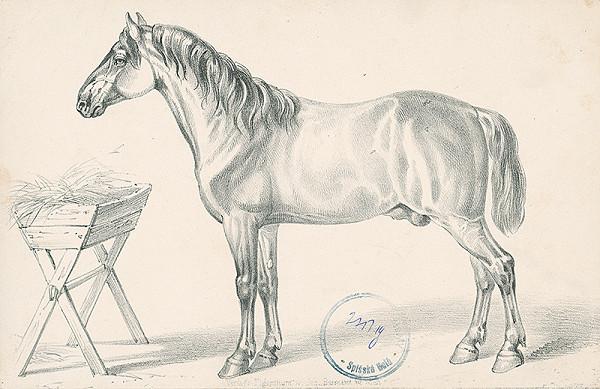 Stredoeurópsky autor z 2. polovice 19. storočia – Kôň