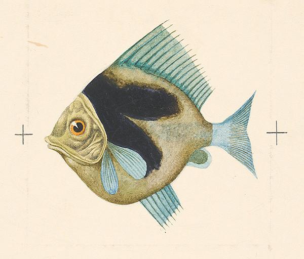 Albín Brunovský – Ryba