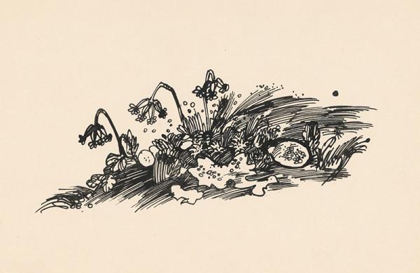 Oto Lupták – 1.- Kvety