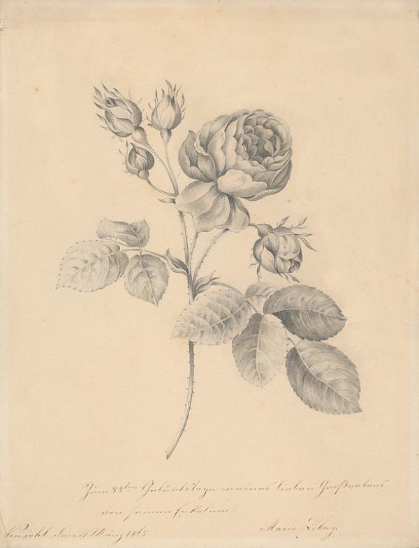 Mária Libayová - Vetvička ruže