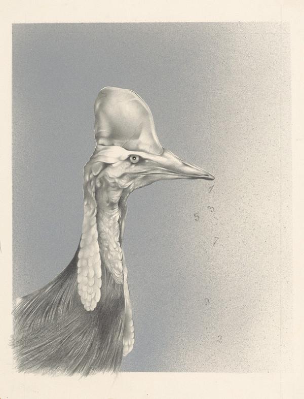 Dušan Nágel – Vták