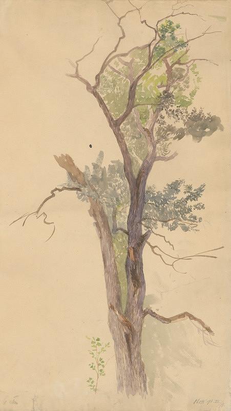 Ferdinand Katona - Štúdia vysychajúceho stromu