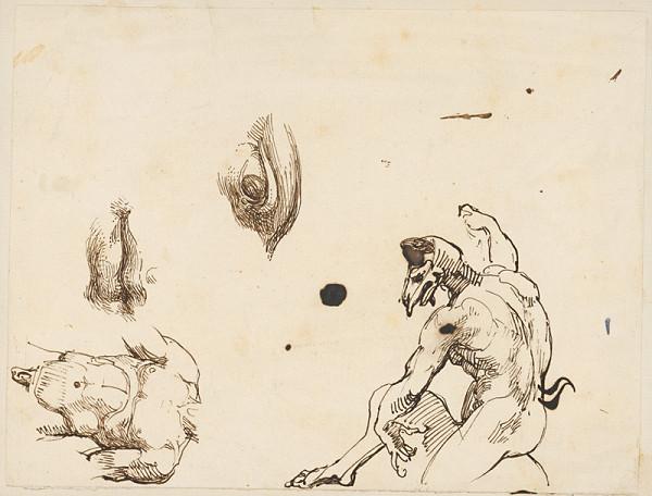 Vincenzo Camuccini – Anatomické štúdie