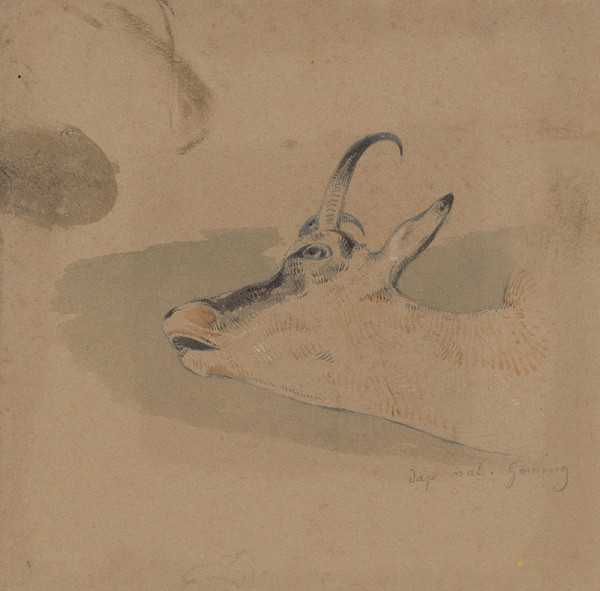 Friedrich Carl von Scheidlin - Štúdia hlavy kamzíka