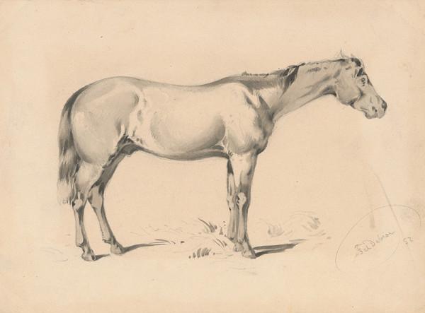 Friedrich Carl von Scheidlin – Štúdia koňa I.