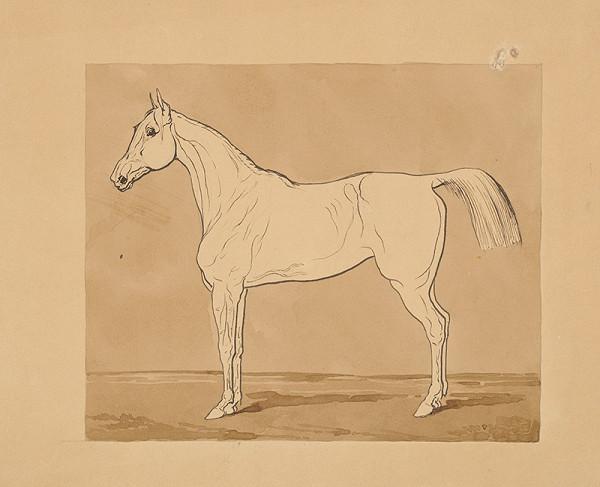Friedrich Carl von Scheidlin – Štúdia koňa II.