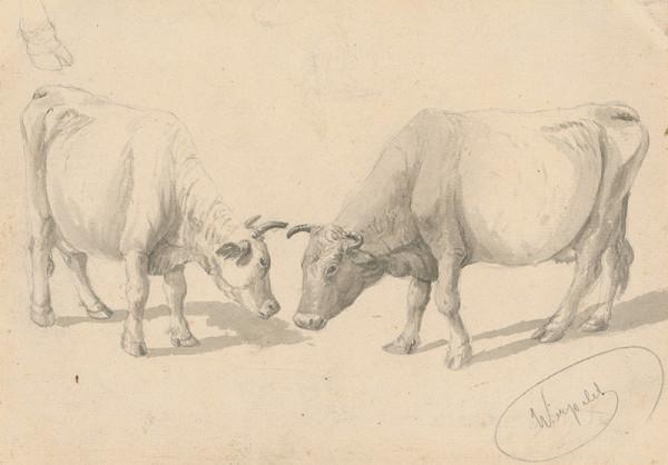 Friedrich Carl von Scheidlin - Štúdia kráv