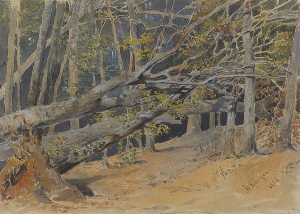 Friedrich Carl von Scheidlin - Štúdia vyrúbaných stromov