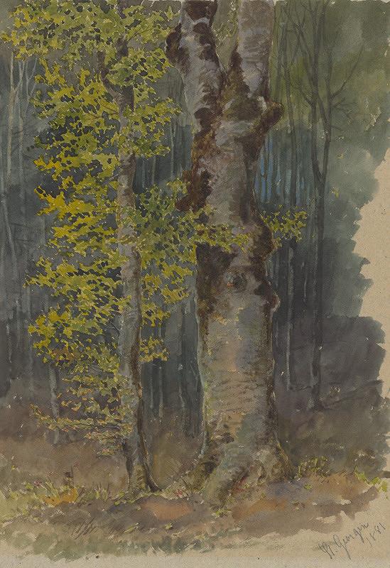 Friedrich Carl von Scheidlin - Štúdia rozvetveného kmeňa