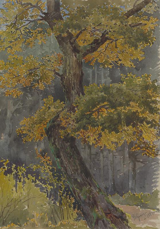 Friedrich Carl von Scheidlin – Štúdia listnatého stromu. Motív zo Sv.Jura