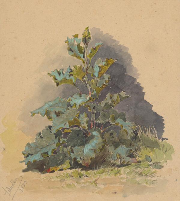Friedrich Carl von Scheidlin – Štúdia listnatej rastliny