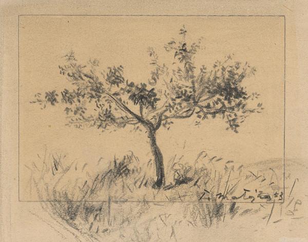 Peter Matejka – Štúdia stromu