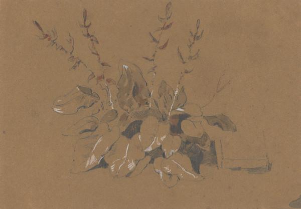 Friedrich Carl von Scheidlin - Štúdia kvitnúcej rastliny