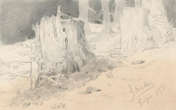Friedrich Carl von Scheidlin – Štúdia horských pňov