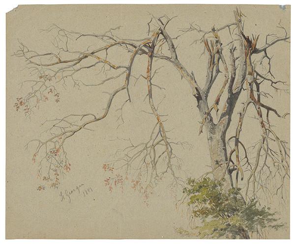 Friedrich Carl von Scheidlin – Strom s nalomenými haluzami. Motív zo Sv.Jura