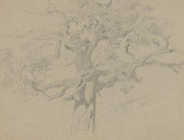 Friedrich Carl von Scheidlin - Strom s uzlovitými haluzami