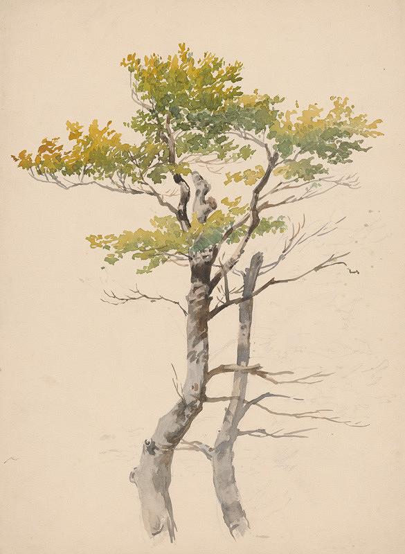 Friedrich Carl von Scheidlin - Štúdia listnatého stromu