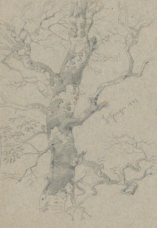 Friedrich Carl von Scheidlin – Štúdia starého rozvetveného stromu