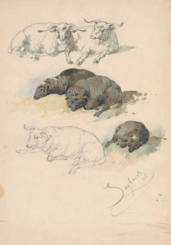 Friedrich Carl von Scheidlin – Štúdia baranov a oviec