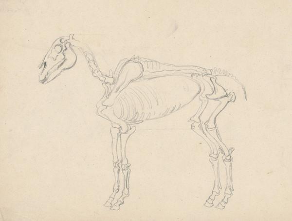 Friedrich Carl von Scheidlin – Štúdia kostry koňa