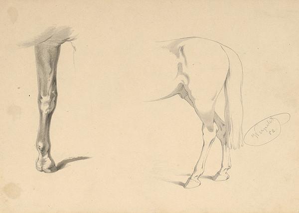 Friedrich Carl von Scheidlin – Detailná štúdia zadnej časti koňa a konskej nohy